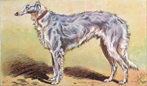 Plate 61 - Siberian Wolfhound