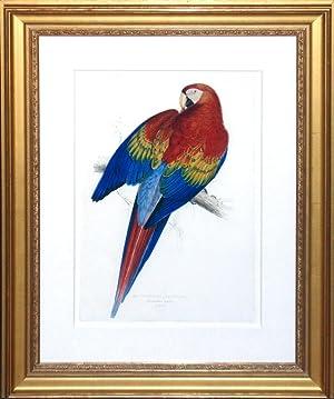 Macrocercus Aracanga (Red and Yellow Macaw or Scarlet Macaw): Edward Lear