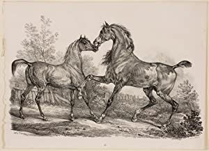 Untitiled Two Horse Scene: Carle Vernet