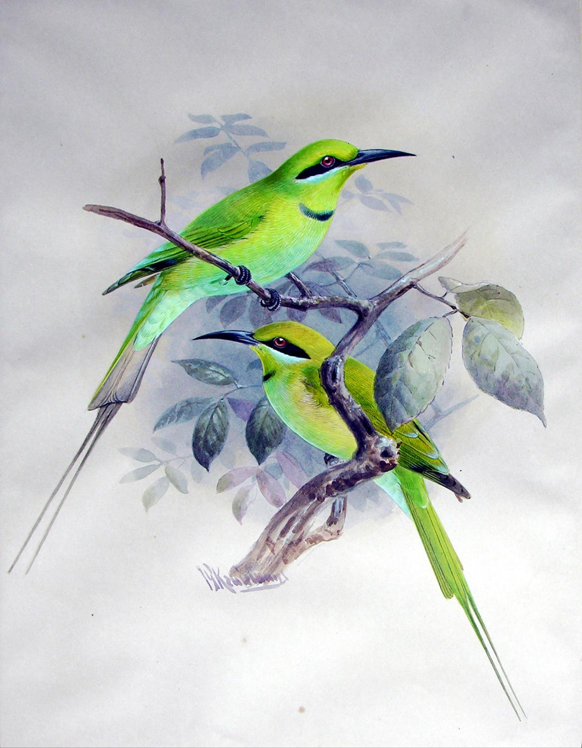 A Monograph of the Meropidae, or Family of the Bee-Eaters: KEULEMANS, J. G (1842-1912) - Henry ...