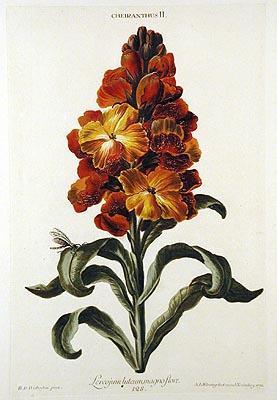 Hortus Nitidissimis omnem per annum superbiens floribus.: TREW, Christoph Jakob