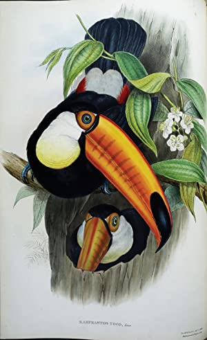 A Monograph of the Ramphastidae, or Family of Toucans.: GOULD, John (1804-1881).