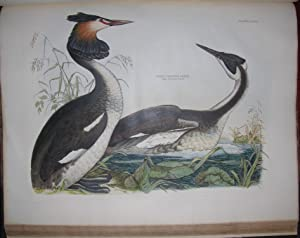 Plates to Selby's Illustrations of British Ornithology: SELBY, Prideaux John