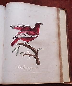 Histoire naturelle d'une partie d'oiseaux nouveaux et: LEVAILLANT, François (1753-1824)