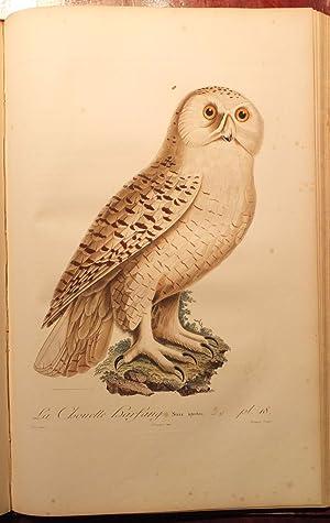 Histoire Naturelle des Oiseaux de l'Amerique Septentrionale: VIEILLOT, Louis Jean