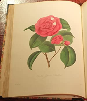 Illustrations and Descriptions of the Plants which Compose the Natural Order Camellieae.