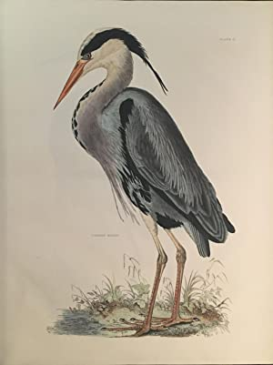 Image result for frederick warne grey heron