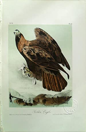 Audubon's Birds of America Plate 12 Golden: John James Audubon