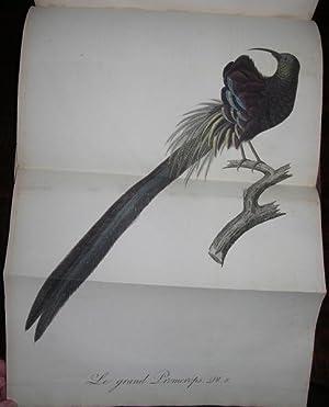 Oiseaux dores ou a reflets metalliques.: AUDEBERT, Jean Baptiste