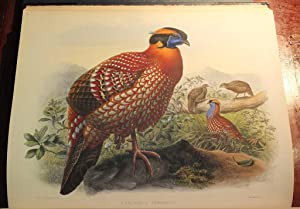 A Monograph of the Phasianidae, or Family of the Pheasants.: ELLIOT, Daniel Giraud (1835-1915).
