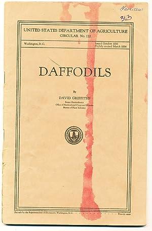 Daffodils: David Griffiths