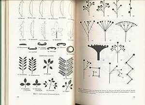 Flora of the Sydney Region: Beadle, N.C.W., et al.