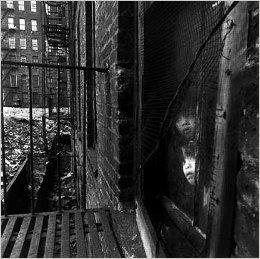 EAST 100TH STREET: BRUCE DAVIDSON - DELUXE LIMITED SIGNED, SLIPCASED EDITION WITH A PHOTOGRAPHIC ...