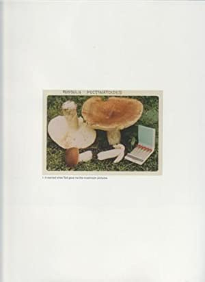 THE MUSHROOM COLLECTOR - SIGNED BY JASON FULFORD