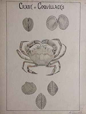 Crabe et Coquillages; Crab and Shells - original drawing