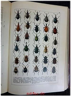 Calwer`s Käferbuch : Einführung in die Kenntnis der Käfer Europas : 2. Band: ...