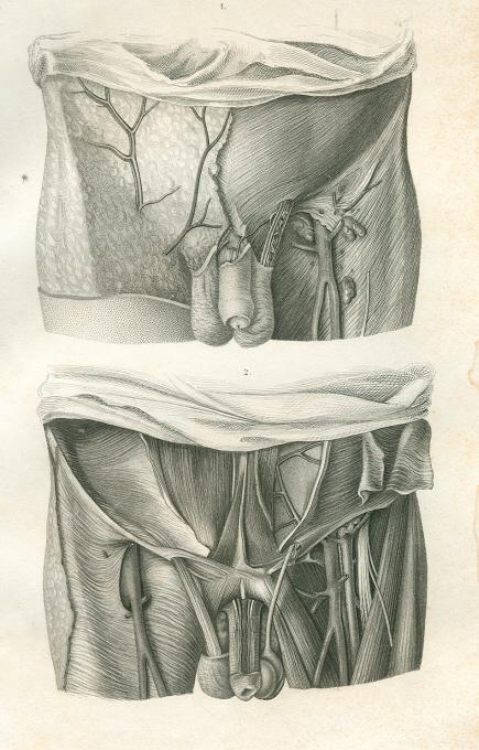 unterbauch und leistengegend von anatomie - ZVAB