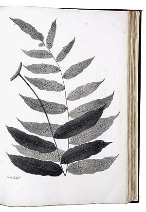 Plantarum Brasiliensium nova henera et species nova,: RADDI, Giuseppe.