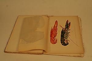 The American Lobster: Herrick, Francis Hobart