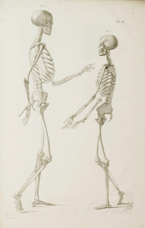 Anatomie Corps Humain Homme anatomie de l'homme ou description et figures lithographiées de