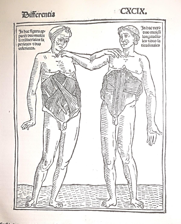 Atemberaubend Nerium Blatt Anatomie Bilder - Anatomie Von ...