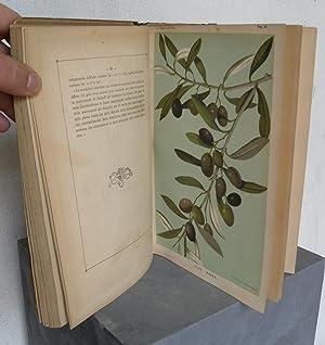 La cultura dell'olivo in Italia. Notizie storiche,: PECORI Raffaello