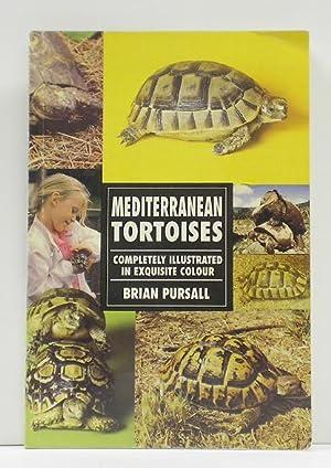 Mediterranean Tortoises: Pursall, Brian