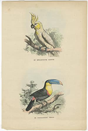 Antique Print of a Cockatoo and Toucan by L.A.J. Burgersdijk (1864)