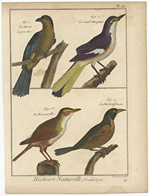 Antique Print of various Birds (Blackbird) by R. Benard (c.1790)