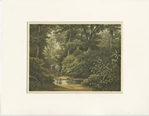Antique Print of a Forest with Elephants(Java) by M.T.H. Perelaer (1888)