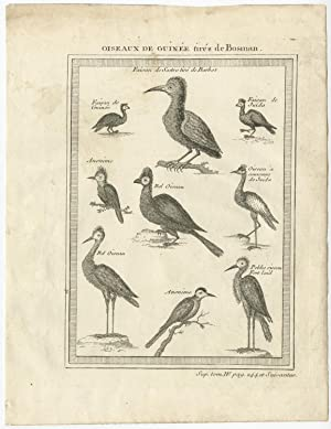 Antique Print of various Birds of Guinea by A.F. Prévost (1757)