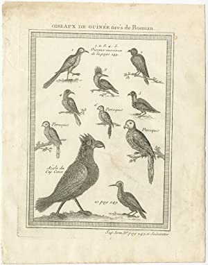 Antique Print of various Birds of Guinea II by A.F. Prévost (1757)