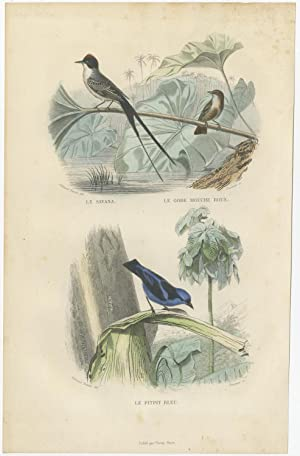 Antique Bird Print of Swallows by E. Travies (c.1860)