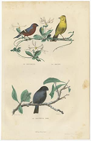 Antique Bird Print of Bullfinch and a Bunting Bird by E. Travies (c.1860)
