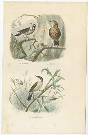 Antique Bird Print of a Redwing, Thrush and Warbler by E. Travies (c.1860)