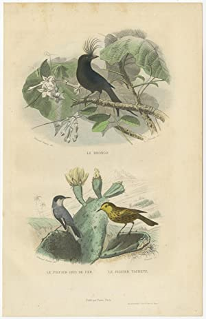 Antique Bird Print of a Drongo and various Warblers by E. Travies (c.1860)