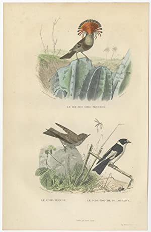 Antique Bird Print of various Flycatchers by E. Travies (c.1860)