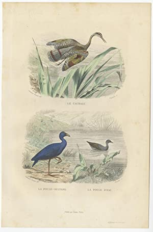 Antique Bird Print of a Sunbittern and various Hen by E. Travies (c.1860)
