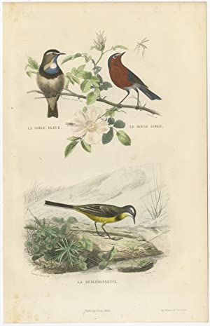 Antique Bird Print of Bluethroat, Redthroat and a Wagtail Bird by E. Travies (c.1860)