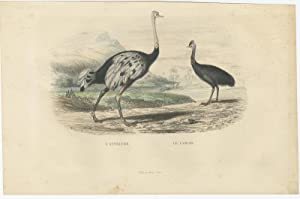 Antique Bird Print of an Ostrich and a Casuarius by E. Travies (c.1860)