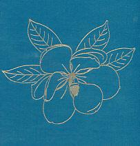 Flora Superba. Signed Limited Edition: Blunt, Wilfred [text]; Jones, Paul [illus.]