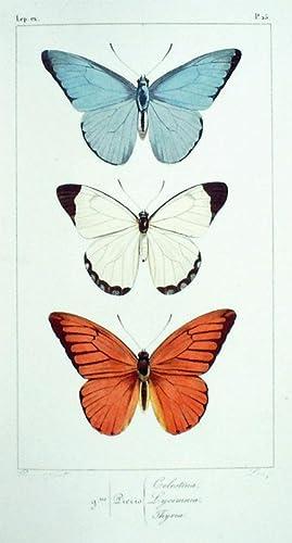 Histoire Naturelle des Lépidoptères Exotiques: Lucas, H; Pauquet [illus.]
