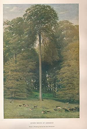 The Trees of Great Britain & Ireland. Seven Volume Set: Elwes, Henry John; Henry, Augustine