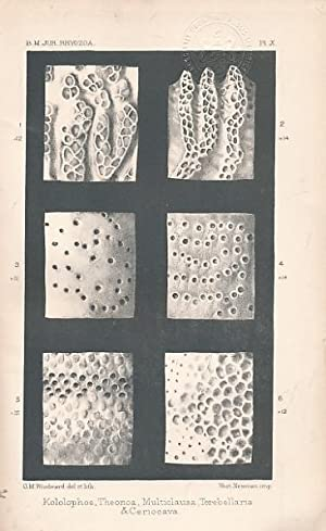 Catalogue of the Fossil Bryzoa in the British Museum: The Jurassic Bryzoa: Gregory, J W