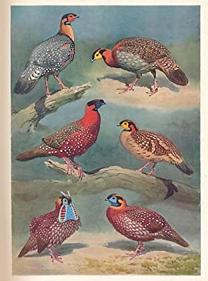 The Pheasants of the World: Delacour, Jean; Harrison, J C [illus.]
