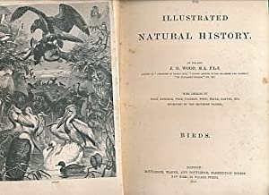 The Illustrated Natural History, Volume II. Birds: Wood, J G