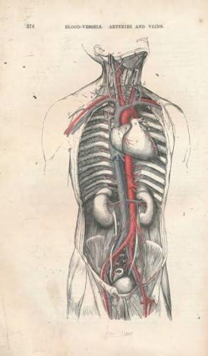 Quain's Elements of Anatomy. Volume II - Part II. Arthrology, Myology, Angeiology: Quain, ...