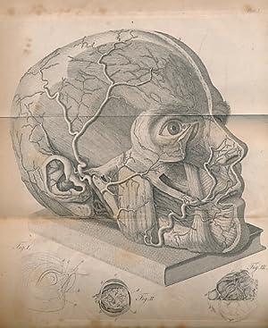 A Treatise on the Principle Diseases of the Eyes: Scarpa, Antonio; Briggs, James [trans.]