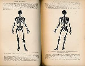Human Morphology. A Treatise on Practical and: Reeves, Henry Albert