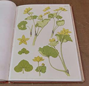 A Series of Sketches from Nature of Plant Form: Hulme, F Edward